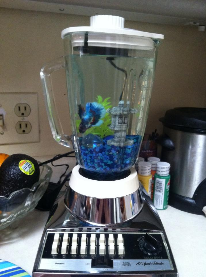 Diy fish tank repurposed blender for Fish in a blender