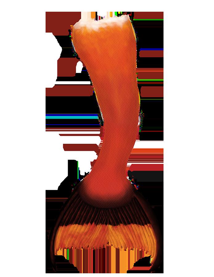 Name:  Raina's mermaid creation tail small.png Views: 287 Size:  341.5 KB