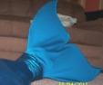 Name:  my mermaid tail 003.JPG Views: 10523 Size:  14.4 KB
