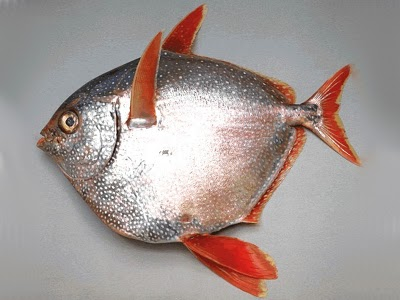 Name:  Opah Fish.jpg