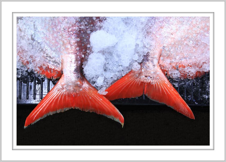 Name:  opah-tails--george-diebold.jpg Views: 558 Size:  188.3 KB