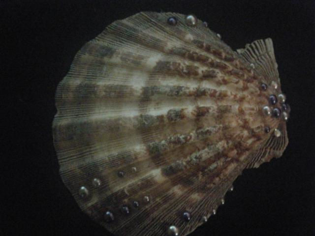 Name:  coquillage (Small).JPG