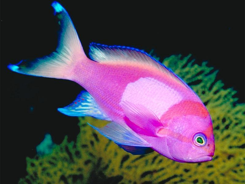 Name:  Tropical-Fish-fish-5412589-800-600.jpg