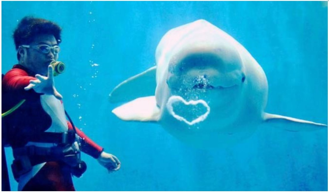 Name:  2013-06-27 13_56_36-All The Gin Joints — White beluga*whales, from the Polarland Aquarium....jpg Views: 891 Size:  83.4 KB
