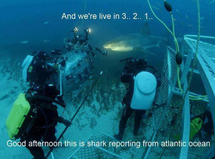 Name:  sharkreporter.jpg Views: 590 Size:  52.9 KB