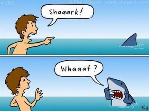 Name:  shaaark.png Views: 204 Size:  304.8 KB