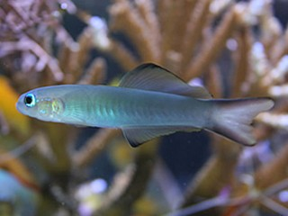 Name:  goby48.jpg