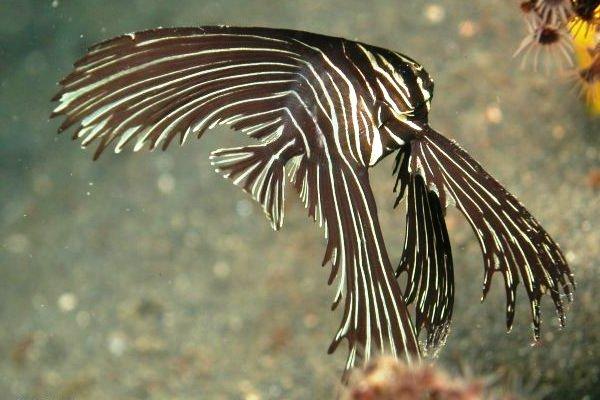 Name:  Batfish.jpg Views: 546 Size:  53.0 KB