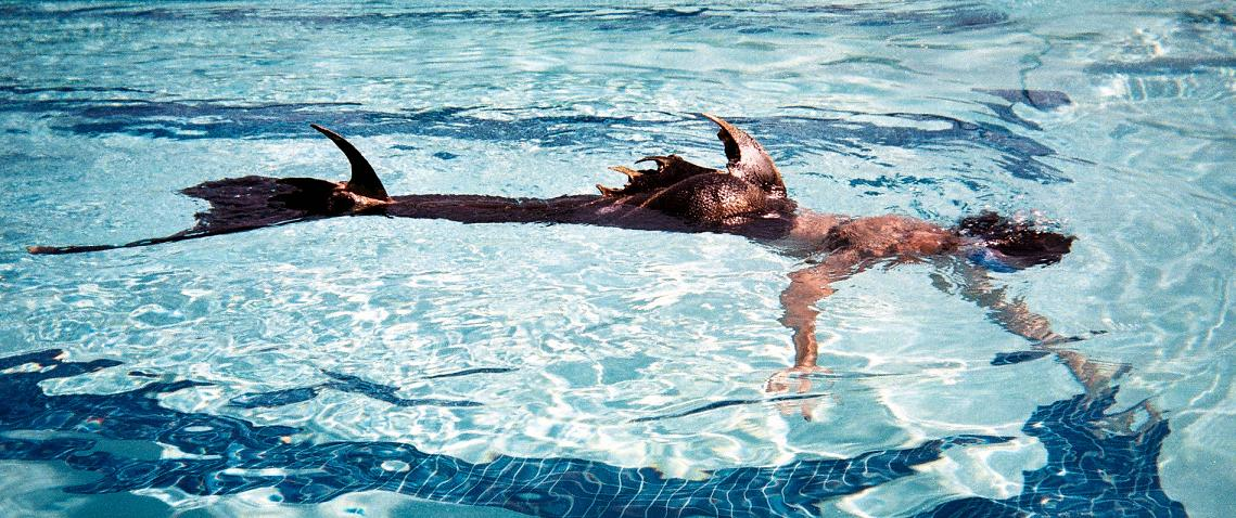 Name:  swimming2.jpg