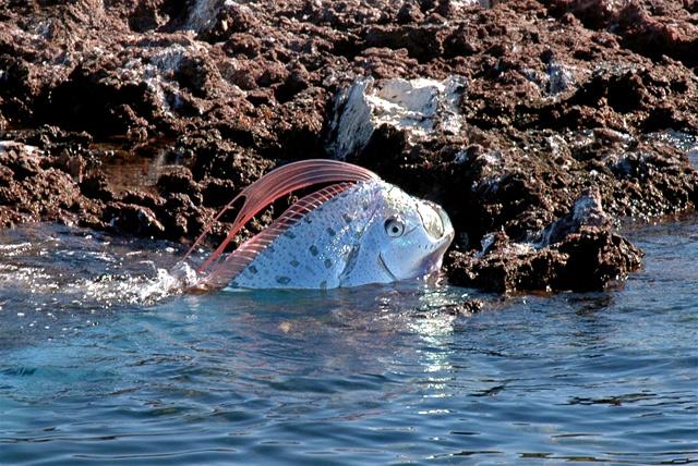 Name:  175343,xcitefun-the-legendary-oarfish-2.jpg Views: 364 Size:  181.2 KB