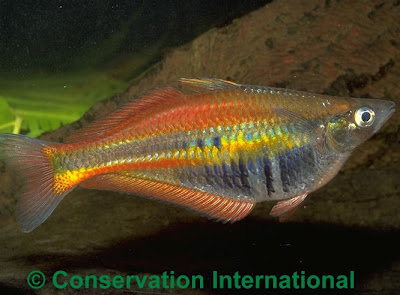 Name:  ikan-pelangi.jpg