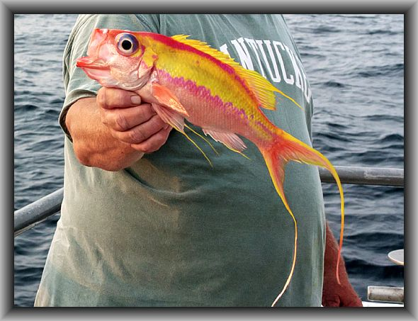 Name:  62_2011-07-24-Voyager-streamer-bass-6143.jpg Views: 949 Size:  56.7 KB