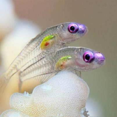 Name:  goby fish.jpg