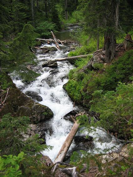 Name:  Swift Creek.JPG Views: 1401 Size:  80.1 KB