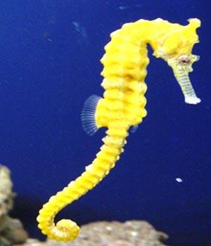 Name:  Seahorse.jpg Views: 817 Size:  15.2 KB